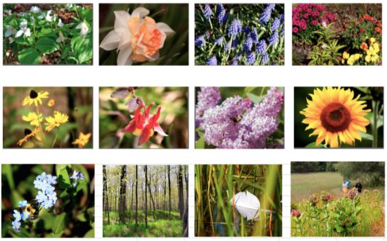 Spring_flowers15