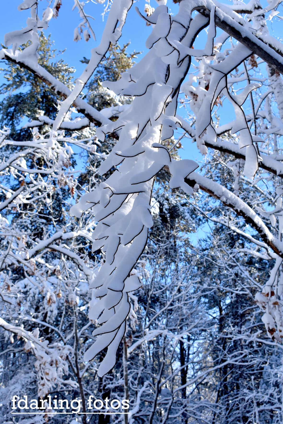 snowybranchhanging_0004